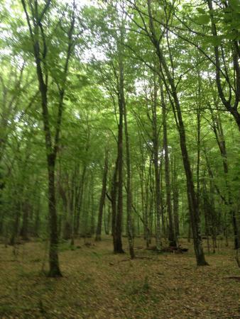 Bialowieza Forest: photo5.jpg