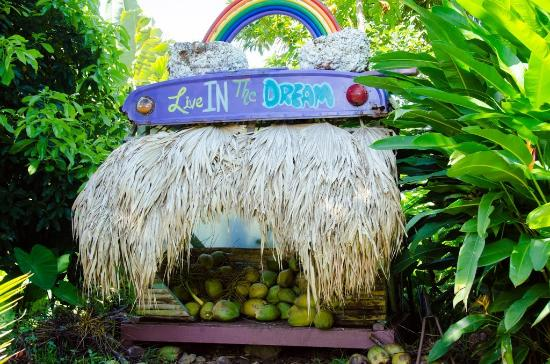 Temptation Tours: coconut stand.....the best homemade coconut ice cream