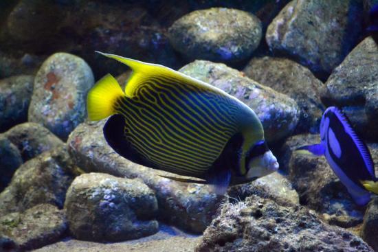Aquarium picture of science museum and botanical garden for Aquarium botanic