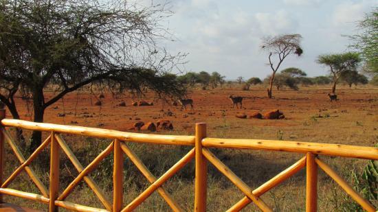 Ngutuni Safari Lodge: View from balcony restaurant
