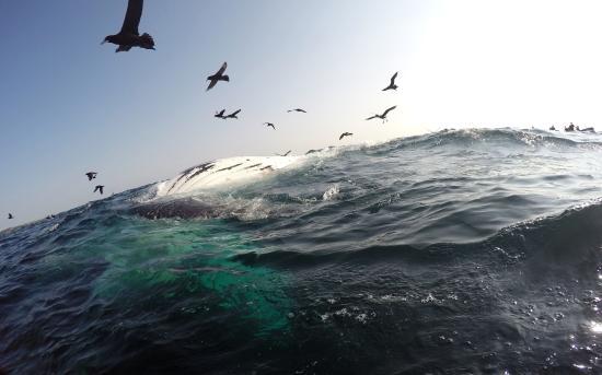 Aliwal Shoal Scuba: Dead whale floating