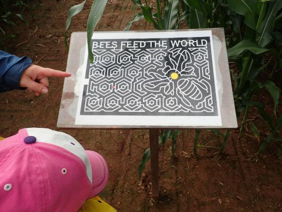 The Chuckwagon Farm Market & Belfast Corn Maze: This year's corn maze map - amazing!