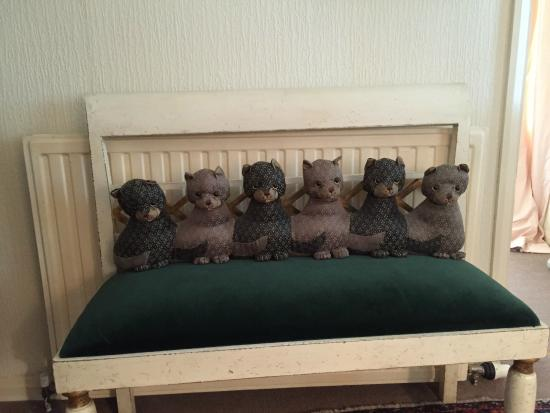 Parford Well Bed & Breakfast: The cat family.