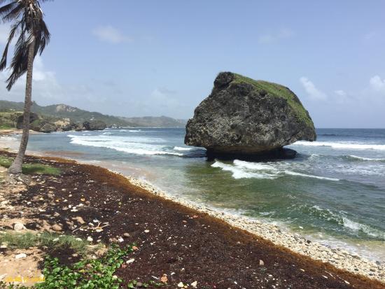 Saint Michael Parish, Barbados: Island Safari Barbados