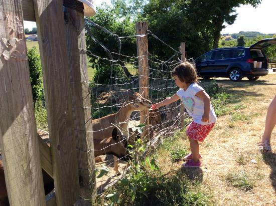 Salles-Lavalette, France: Fun feeding the goats