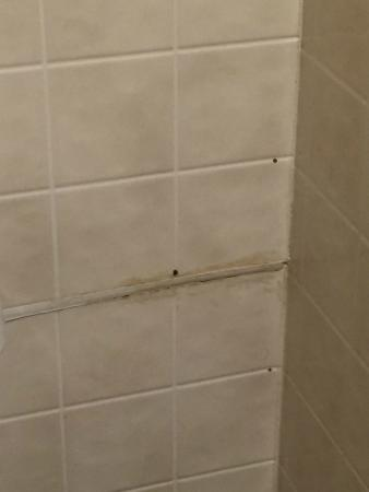 Sea Garden Motel: Bathroom
