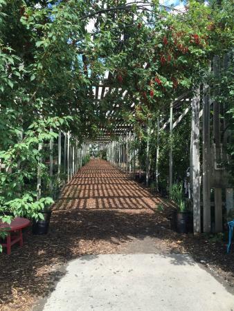 De Winton, Canadá: Plants for Sale