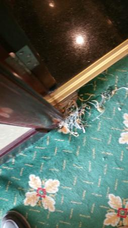 Ramada Brasov: The state of the carpet in the room