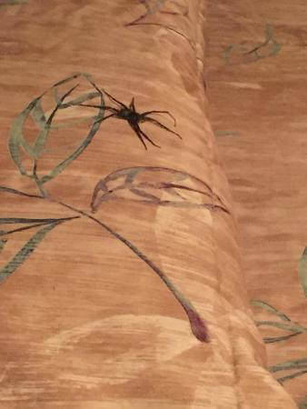 Riverside Motel: The spider on our pillow