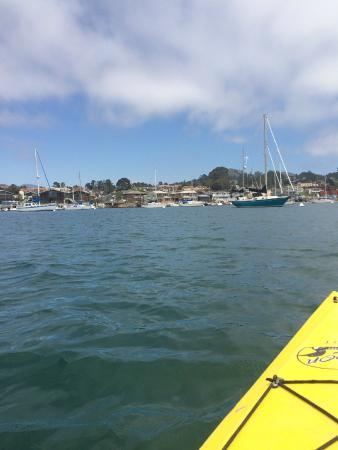 Kayak Horizons: Hanging out in Morro Bay