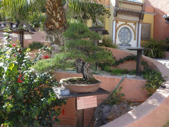 Jardín-Museo del Bonsái: Vy från trädgården