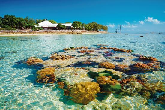 Heron Island Resort Reviews