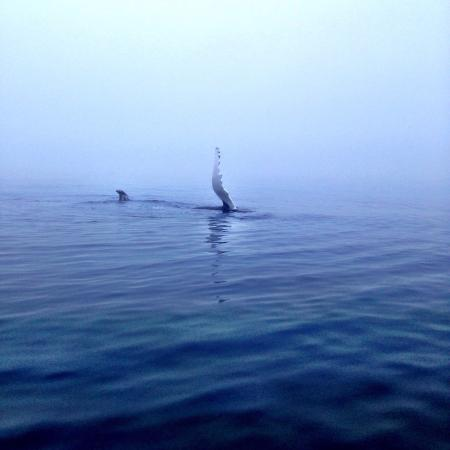 Brier Island Whale and Seabird Cruises: What an amazing time! We saw so many whales. The crew were fantastic!! They kept us in the know