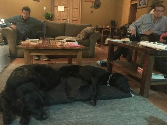 Lazy Dog Inn: Living room hang out by the fire before dinner
