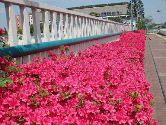 Heisei Tsutsuji Park