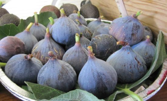 Trattoria Modigliani: Figues fraîches