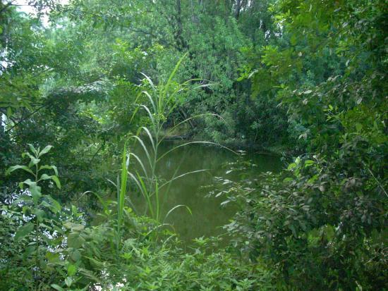 FIU Nature Preserve