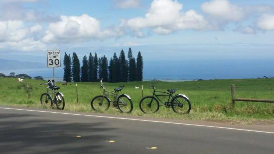 Paia, Hawái: Had THE best time woth dream team Billy & Billy with Maui Easy Riders. Highly recommended!