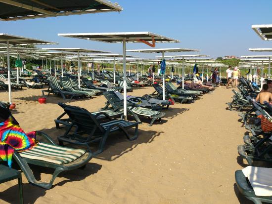 Sural Resort: Свободные лежаки, около 12.