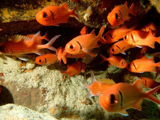 Principe, Sao Tome and Principe: Fish