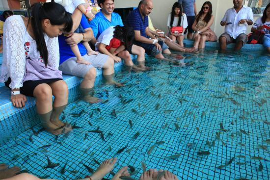 Fish spa with fun picture of manila ocean park manila for Fish spa near me