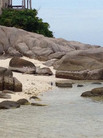 Nangyuan Island Dive Resort: photo0.jpg