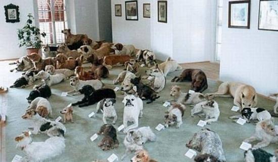 Bitov, Czech Republic: Dead dogs