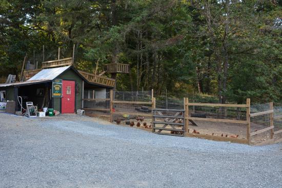 Benvenuto Bed & Breakfast: Benvenuto B&B - Chicken coop