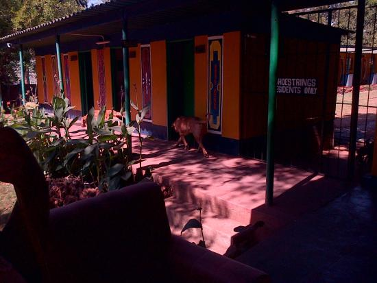 Shoestrings Backpackers Lodge: dogs