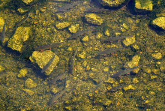 Francueil, Francia: fish