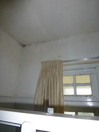 The Gregory House: mold bathroom