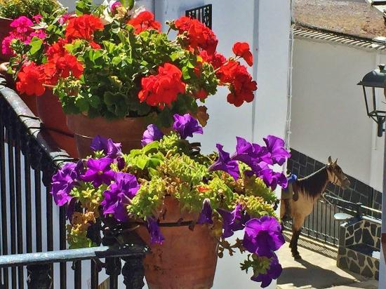 View from balcony at La Fragua - beautiful flowers ..... and a horse!