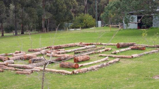 Number Names Worksheets simple maze for kids : simple maze for kids - Picture of Yallingup Maze, Yallingup ...