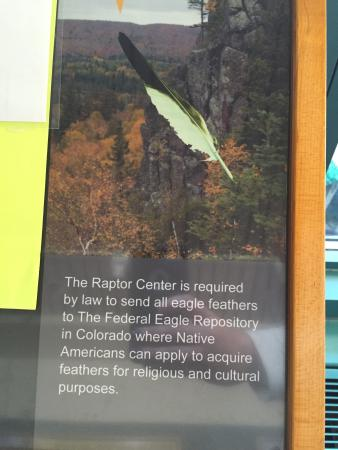 The Raptor Center : cool facts, cool birds