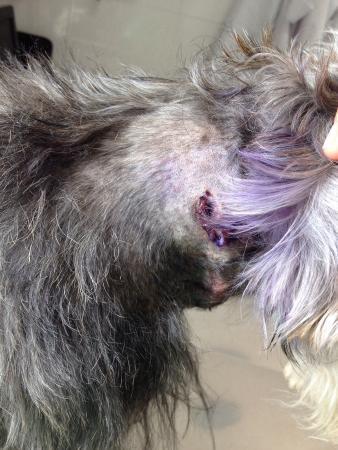 Cabanas el Refugio: Nos llevamos una muy mala experiencia. El perro de la dueña mordió gravemente a nuestro schnauzz
