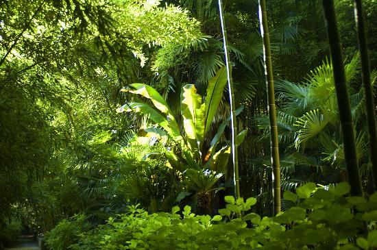 Bambousaie de La Roque-Gageac