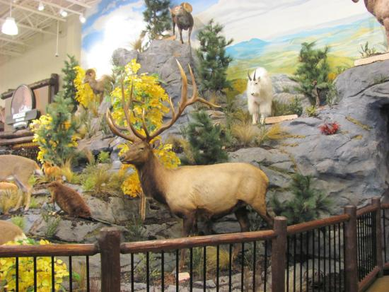 So Much To See Inside Cabelas Moncton