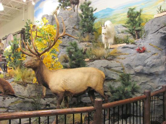 Cabela's Moncton, NB Inside store close up