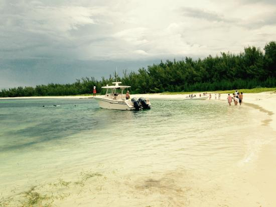 Feeding The Pigs At No Name Cay Picture Of Treasure Cay