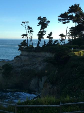 Inn at Arch Rock: Whale spouting