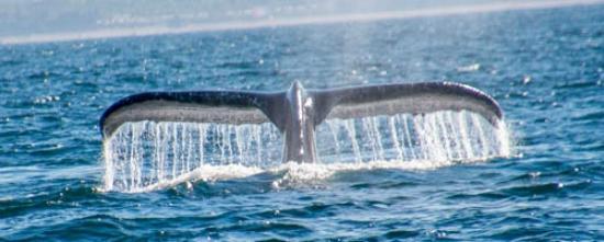 Depoe Bay, Oregón: Randy's whale tail