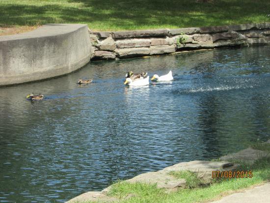 Bay City, MI: Ducks