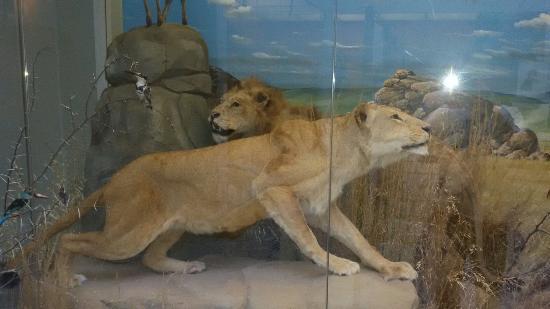 Museo di Storia Naturale Faraggiana Ferrandi
