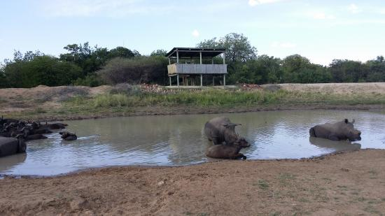 Tshukudu Bush Camp: Game viewing deck