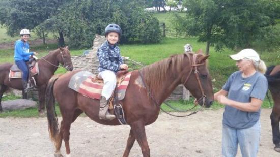 Overland Morgan Horse Farm Dansville Ny Top Tips