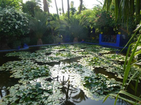 Jardin de majorelle picture of jardin majorelle for Jardin majorelle 2015