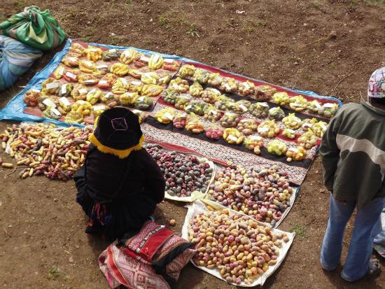 Potato Park: Variedades de papa cultivadas en la comunidad campesina de Amaru, Parque Nacional de la Papa