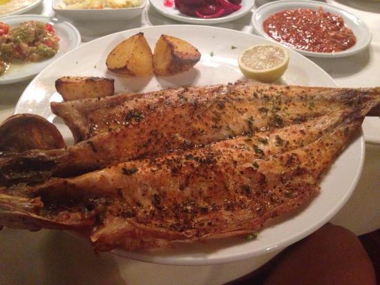 Mullet fish picture of galei gil tiberias tripadvisor for Eating mullet fish