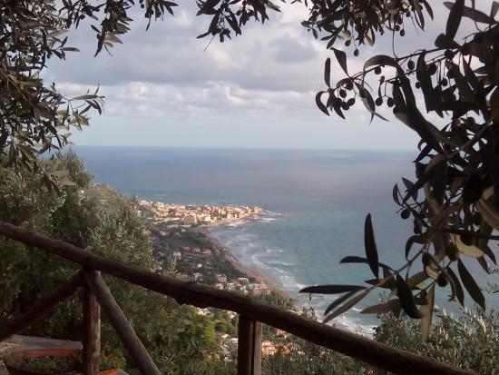 Casale Santa Rosalia: balconata di ulivi verso acciaroli