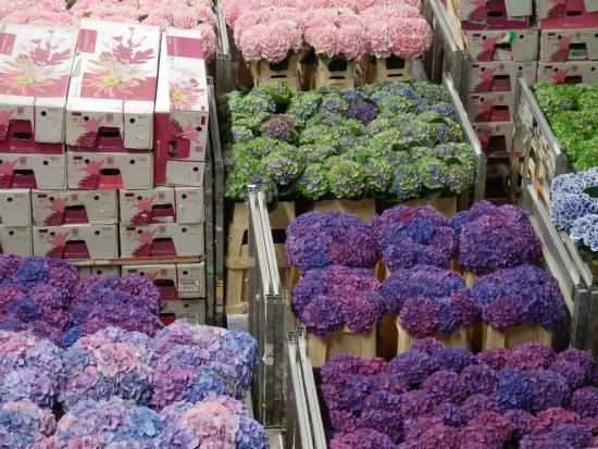Holland Personal Tour Guide : Flower Auction